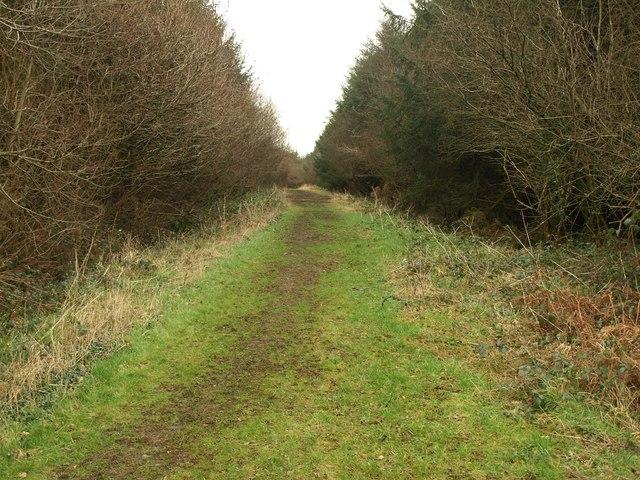 South Moor Plantation