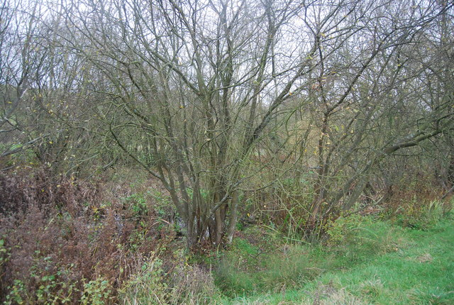 Marshy woodland, Loose Valley