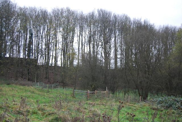 Woodland, Loose Valley