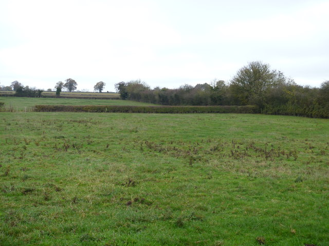 Pasture and hedges