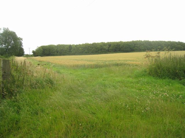 Field off the Wayfarer's Walk