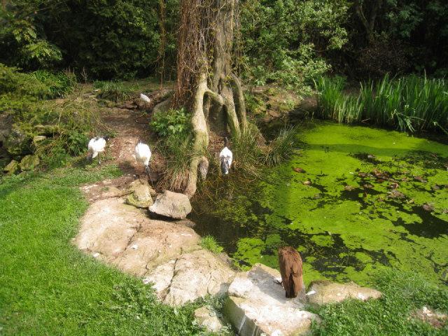 Ibis enclosure - Linton zoo