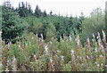 SN7949 : In the Dalarwen Plantation, Ceredigion by Roger  Kidd