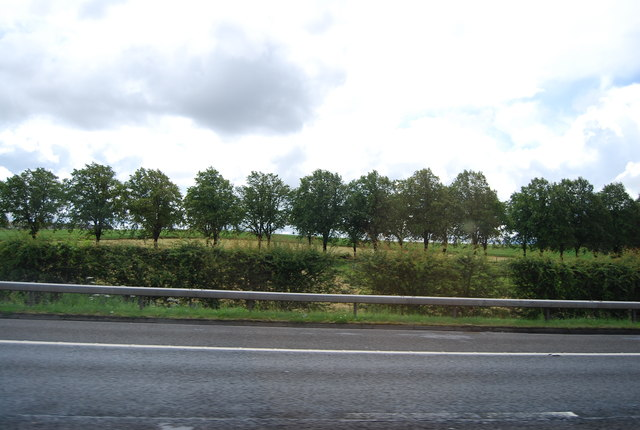 Trees lining Arkleston Rd