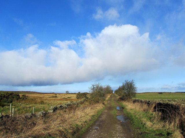 Drift Lane