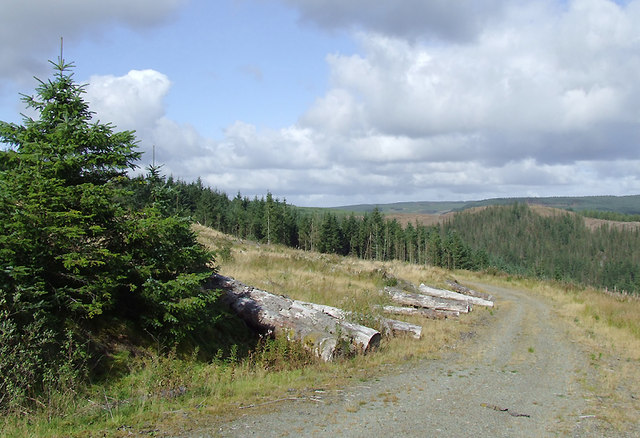 Forestry road in the Dalarwen Plantation, Ceredigion