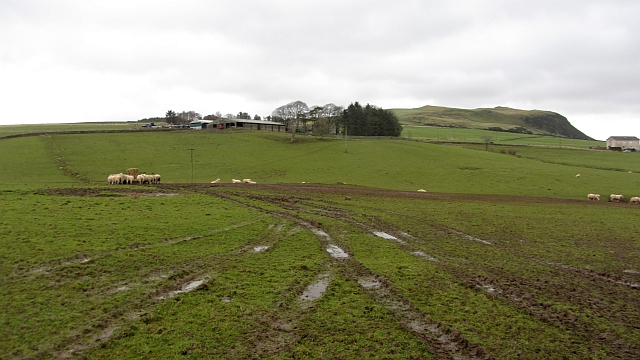 Field of sheep, Anston