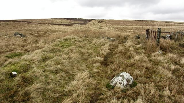 Overgrown dyke