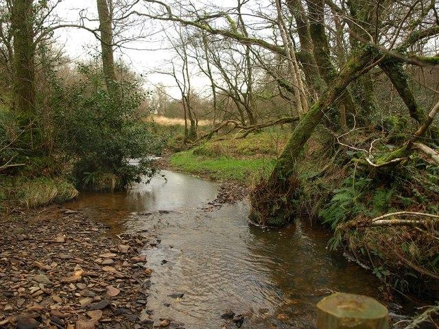 Stream, Wadland Down Plantations