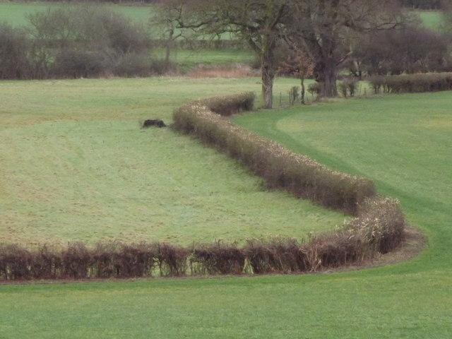 Fields in Mole Valley