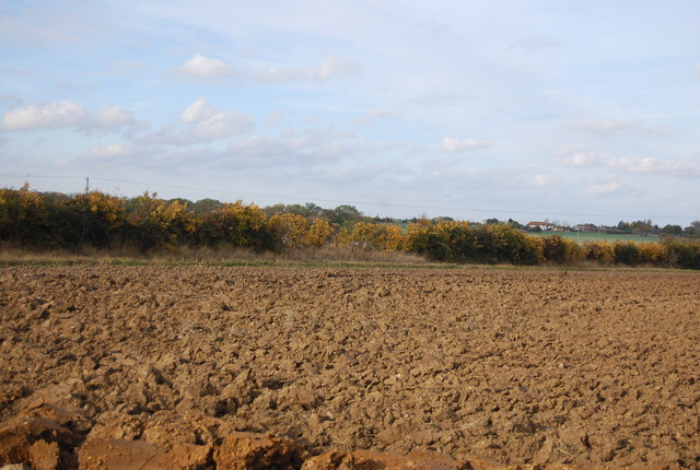 Autumnal hedge across a ploughed field