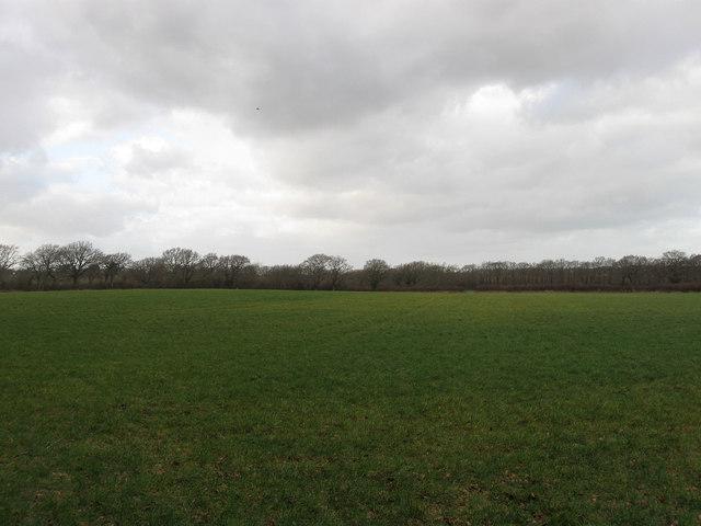 Whites Field