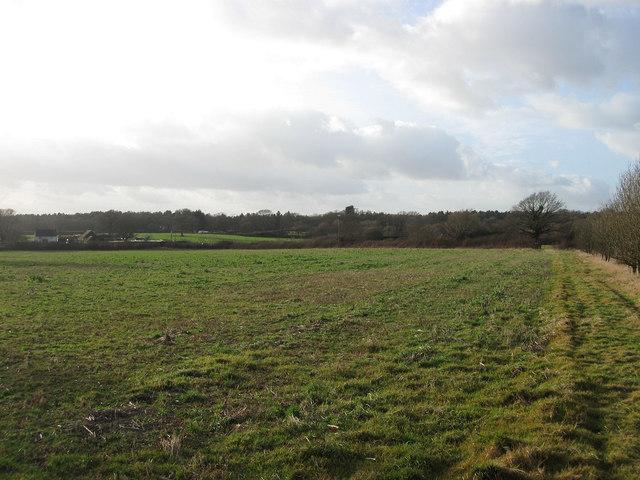 Ripe Field