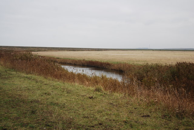 Cooling Marshes
