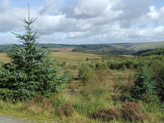 Moorland south-east of Soar-y-Mynydd, Ceredigion