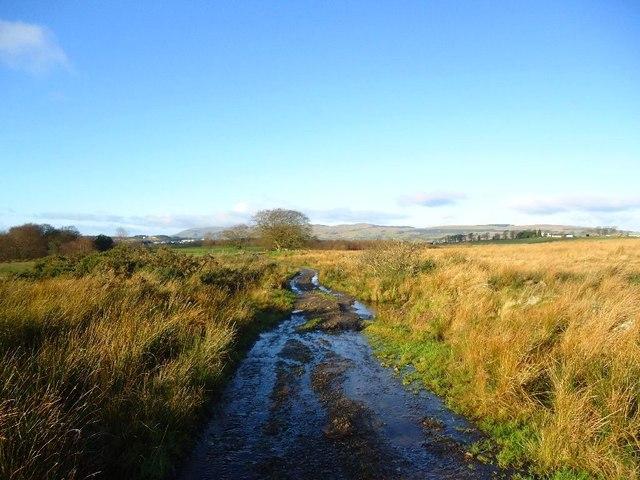 Castlecary Muir [4]