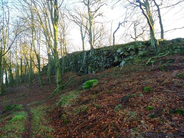 Castlecary High Wood [2]