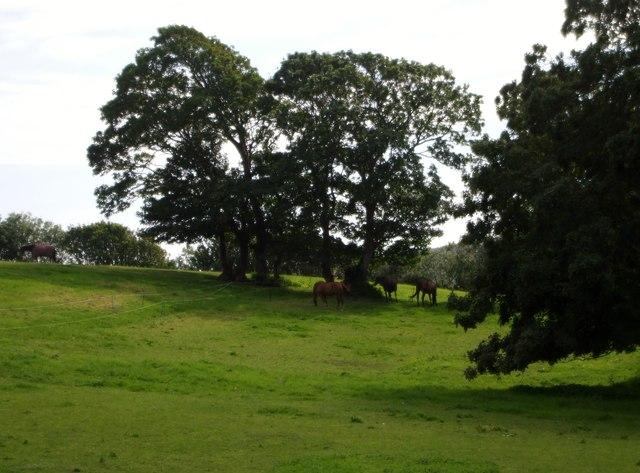 Field of horses, Tarring Neville