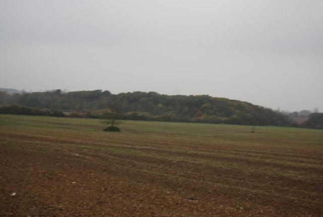 West End Wood