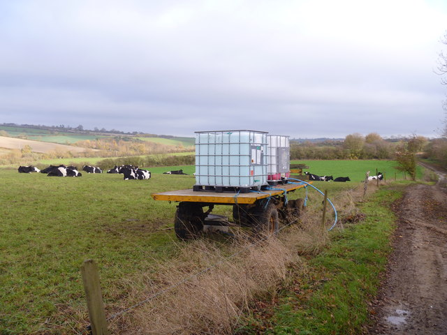 Water for the cattle