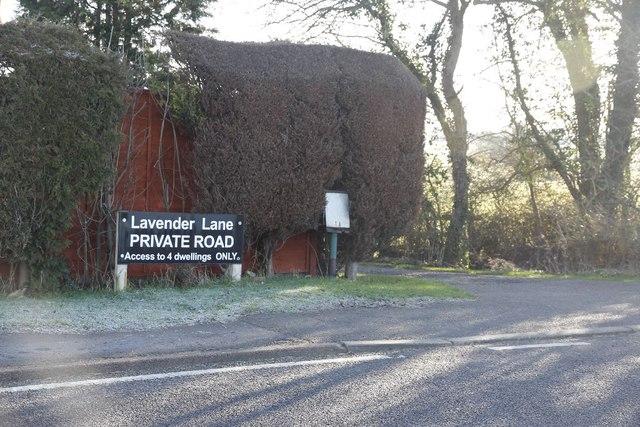 Lavender Lane