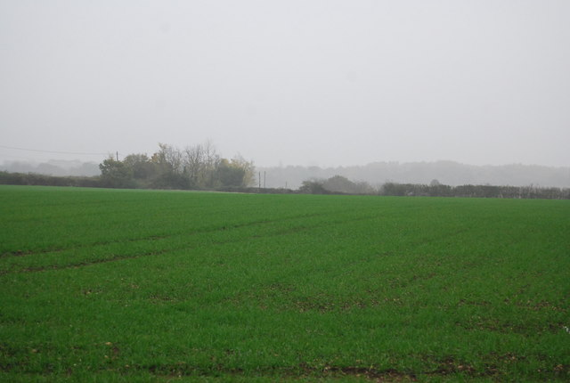 Wheat, Buckwell Farm