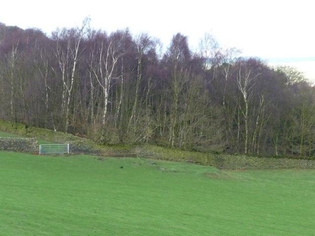 Hawk Cliff woodland