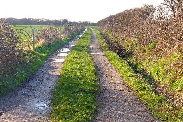 Footpath near Downton