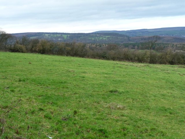 Hedge alongside the footpath track