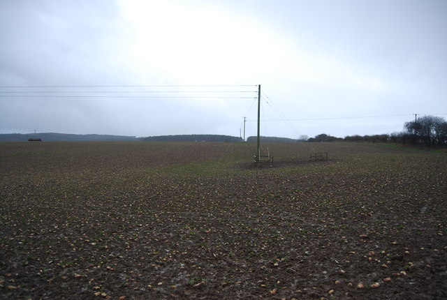 Power lines across a turnip field