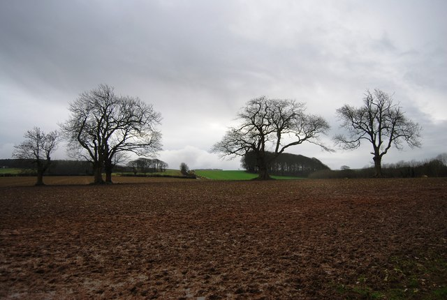 Trees in a ploughed field