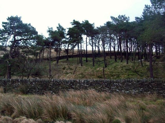 The Broadshaw Plantation