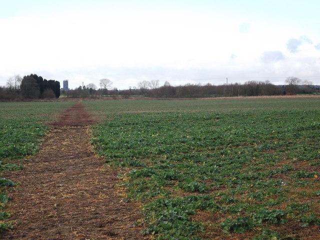 Footpath to Hadlow