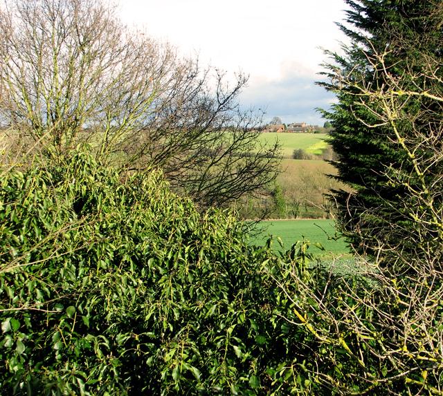 A glimpse through the hedge, Cherryground