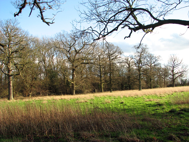 The western edge of Round Wood, Burstall