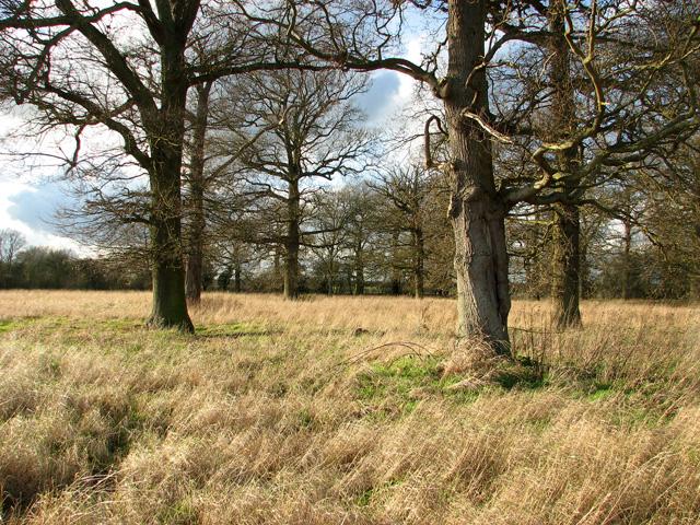 Elbow Wood, Burstall
