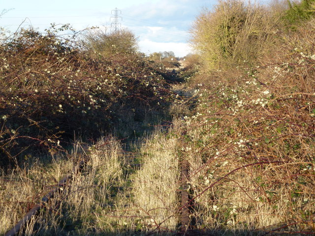 The Bramley Line looks more like the bramble line!
