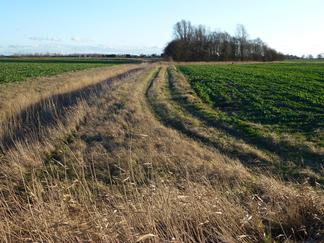 Copse and track, Long Drove, Waldersey