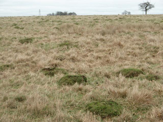 Ant hills in pasture land