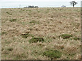 SP9652 : Ant hills in pasture land by Michael Trolove
