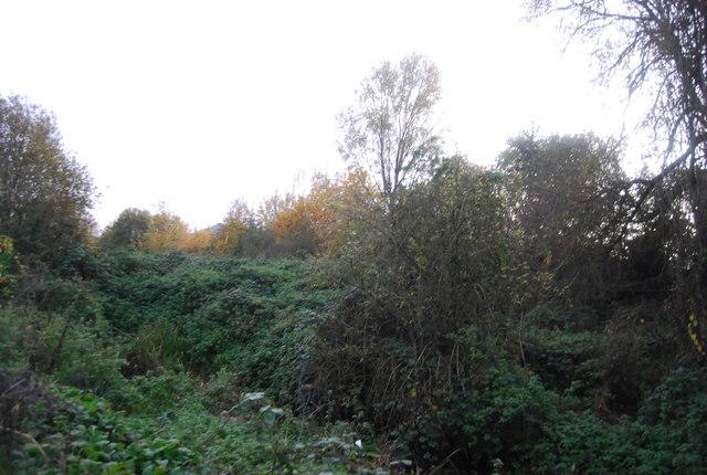 Hollybush Park