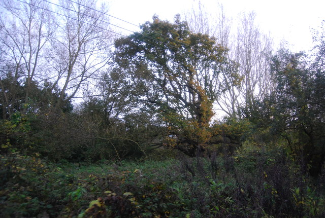 Autumnal colours, Hollybush Park