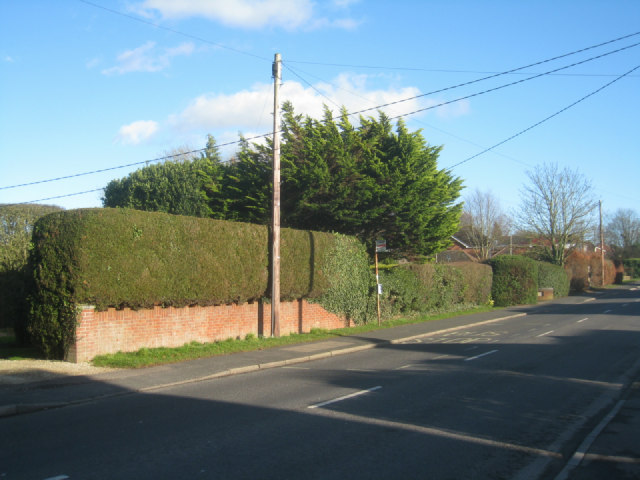 Neat hedge - Pack Lane
