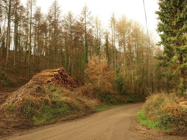 Log pile by the lane, Bovey Warren