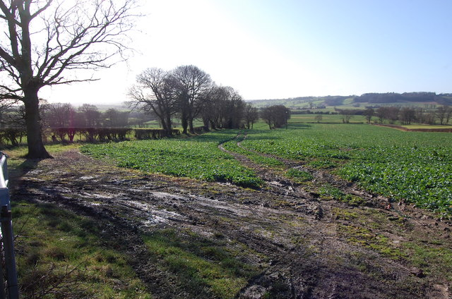 Farmland near Kestrels View Farm