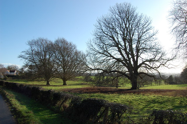 Winter Trees off Cranbrook Road