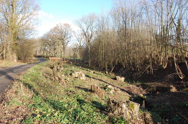 Sheaf Wood, off Mounts Lane