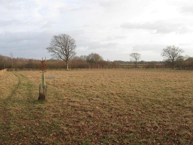 Site of Latchett Wood
