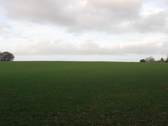 Elm Field