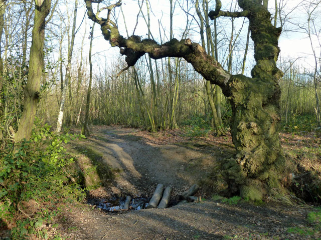 A way in to Brook Wood